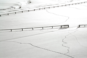 Picture of Tracks in the Snow